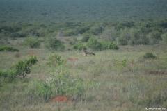 AfricaS00321