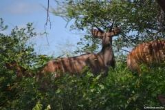 Kruger00493