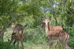 Kruger00539
