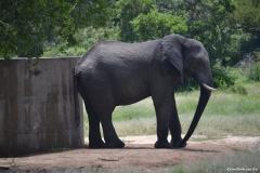 Kruger00558
