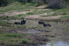 Kruger00705