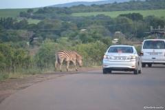 Kruger00031