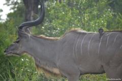 Kruger00384