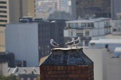 Cape-Town00070