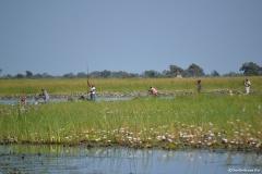 Okavango00298