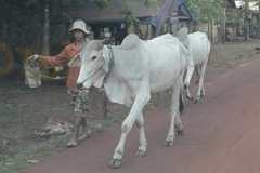 Oameni din Cambodia00127