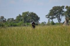 Okavango00471