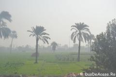 Tren-Egipt13