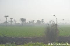 Tren-Egipt14