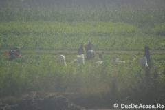 Tren-Egipt15