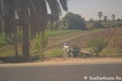 Tren-Egipt30