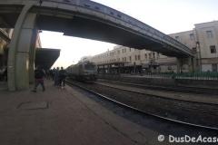 Tren-Egipt44