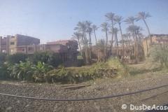 Tren-Egipt47