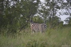 Kruger00306