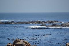 Cape-Town00174