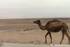 Qasr Amra00029