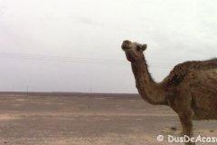 Qasr Amra00030