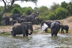 elephanthome573-Copie