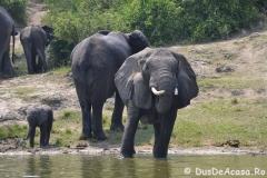 elephanthome586