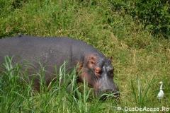 elephanthome503