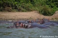 elephanthome760
