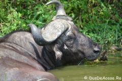 elephanthome841