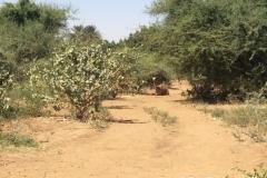 Sudan00236