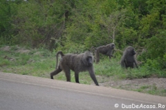 elephanthome275