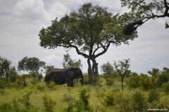 AfricaS00032
