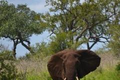 AfricaS00164