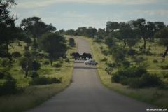 AfricaS00397