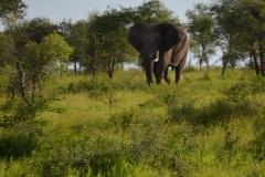 AfricaS00405