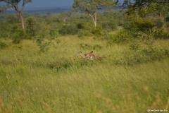AfricaS00423