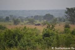 elephanthome1003