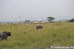 elephanthome1024