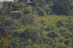 elephanthome17
