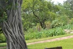 Kruger00217