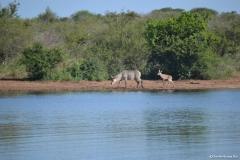 Kruger00756