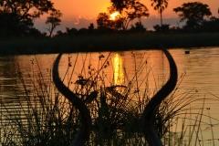 Okavango00015