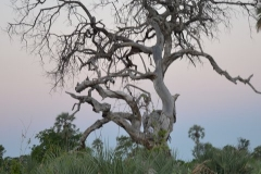 Okavango00041