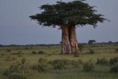Okavango00043