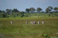 Okavango00488