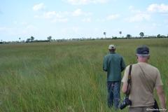 Okavango00524