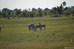 Okavango00662