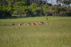 Okavango00724