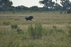 Okavango00810