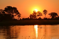 Okavango00978