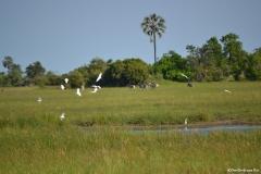 Okavango00172