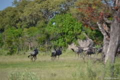 Okavango00189