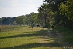 Okavango00025